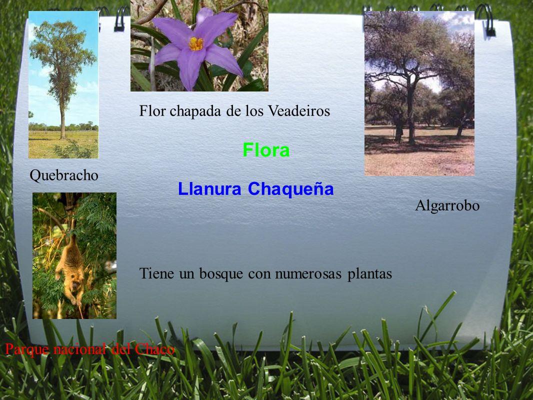Flora Llanura Chaqueña Quebracho Algarrobo Tiene un bosque con numerosas plantas Parque nacional del Chaco Flor chapada de los Veadeiros