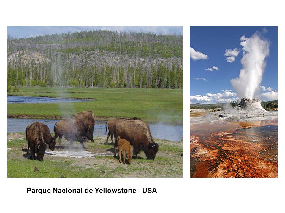 CONTENIDO DE LA PRESENTACIÓN Parque Nacional de Yellowstone - USA