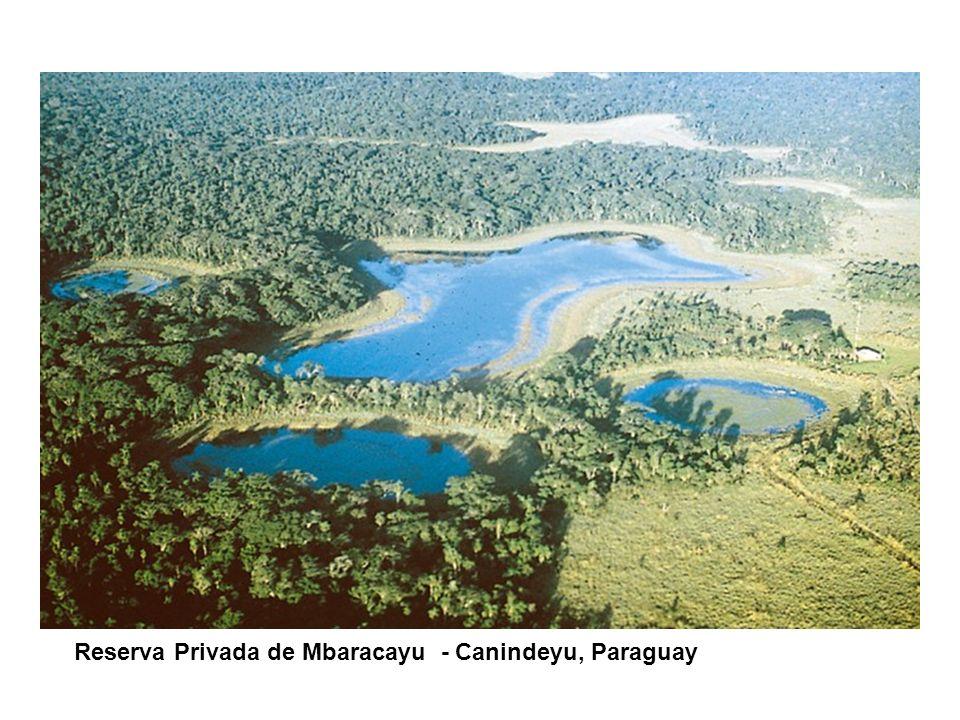 CONTENIDO DE LA PRESENTACIÓN Reserva Privada de Mbaracayu - Canindeyu, Paraguay