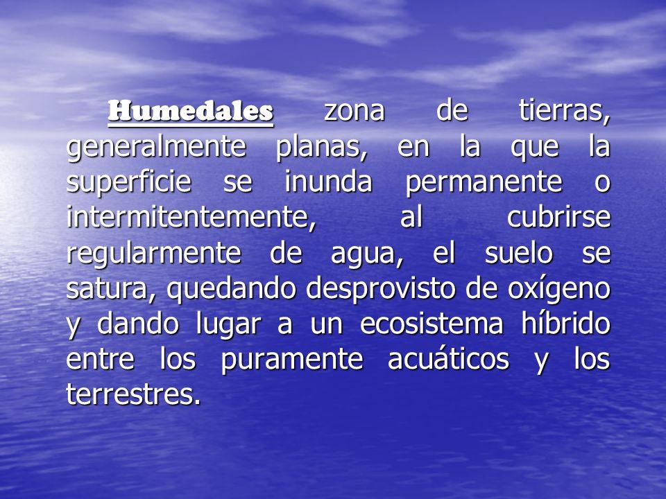 Humedales zona de tierras, generalmente planas, en la que la superficie se inunda permanente o intermitentemente, al cubrirse regularmente de agua, el