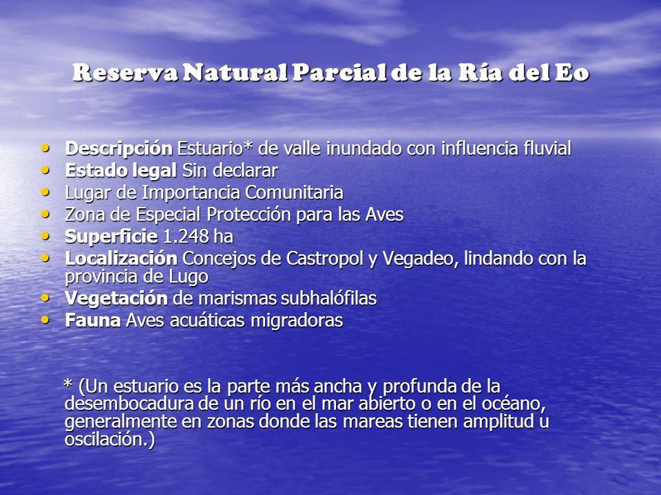 Reserva Natural Parcial de la Ría del Eo Descripción Estuario* de valle inundado con influencia fluvial Descripción Estuario* de valle inundado con in