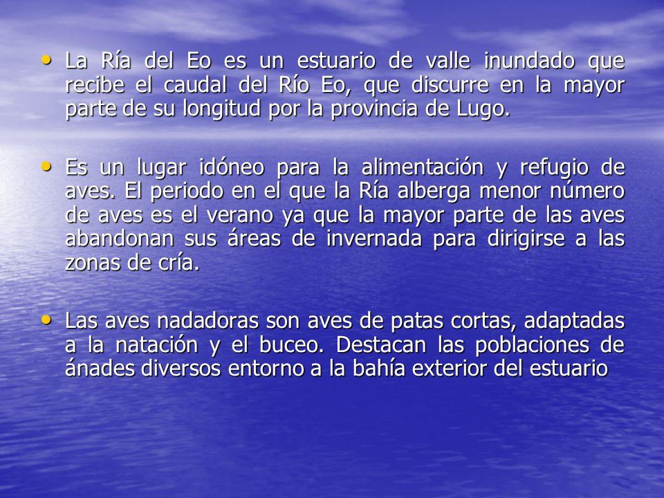 La Ría del Eo es un estuario de valle inundado que recibe el caudal del Río Eo, que discurre en la mayor parte de su longitud por la provincia de Lugo