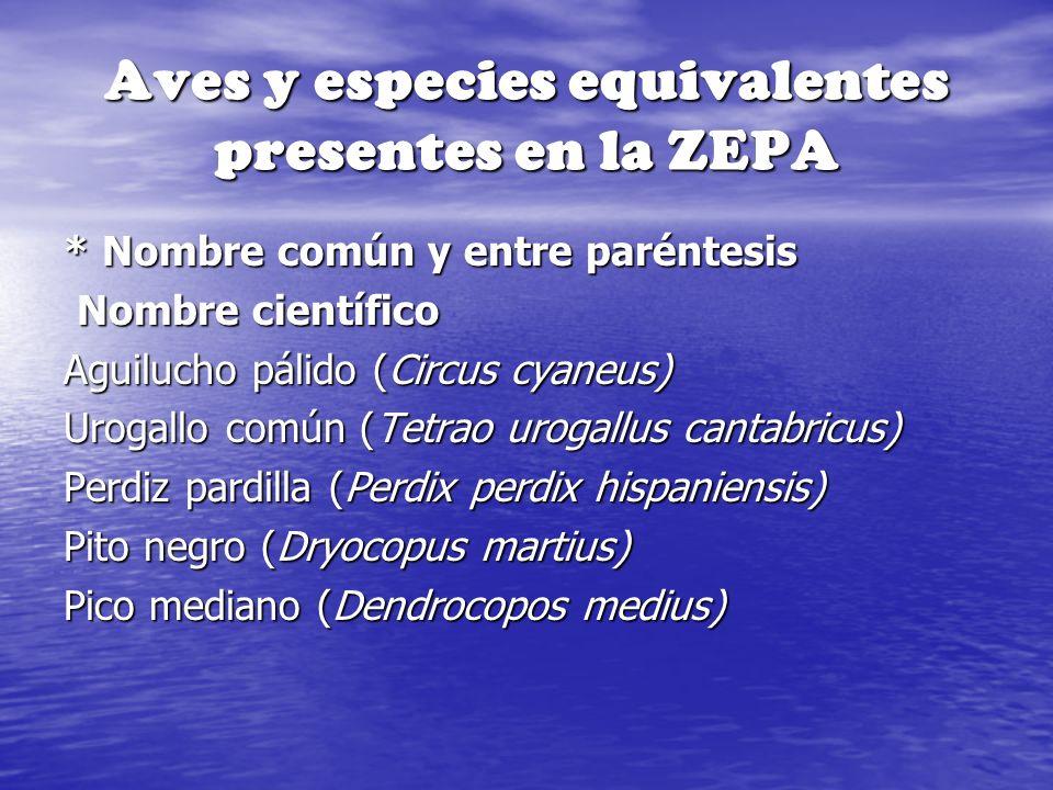 Aves y especies equivalentes presentes en la ZEPA * Nombre común y entre paréntesis Nombre científico Nombre científico Aguilucho pálido (Circus cyane