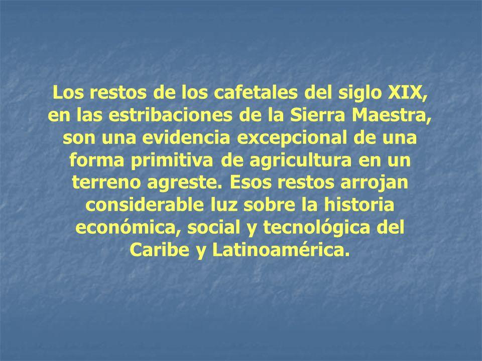 Los restos de los cafetales del siglo XIX, en las estribaciones de la Sierra Maestra, son una evidencia excepcional de una forma primitiva de agricult