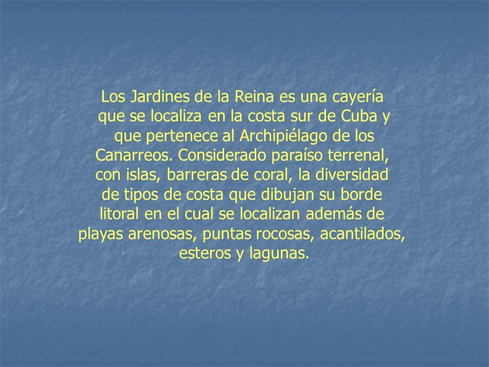Los Jardines de la Reina es una cayería que se localiza en la costa sur de Cuba y que pertenece al Archipiélago de los Canarreos. Considerado paraíso
