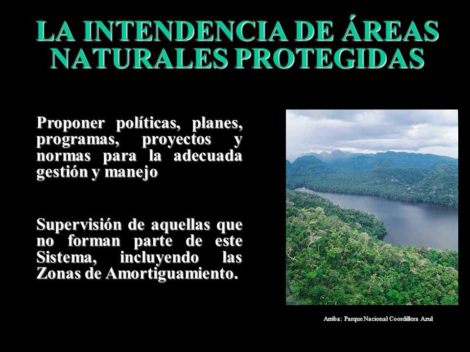 INTENDENCIA DE ÁREAS NATURALES PROTEGIDAS (DS N° 002-2003-AG) DIRECCIONES DE LINEA DIRECCIÓN DE PLANEAMIENTO DE ÁREAS NATURALES PROTEGIDAS DIRECCIÓN D