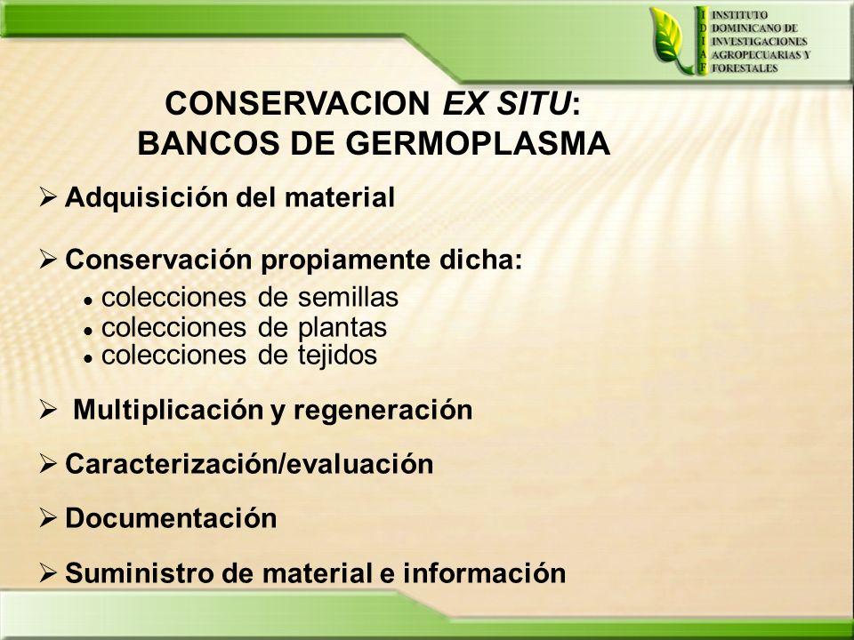 CONSERVACION EX SITU: BANCOS DE GERMOPLASMA Adquisición del material Conservación propiamente dicha: colecciones de semillas colecciones de plantas co