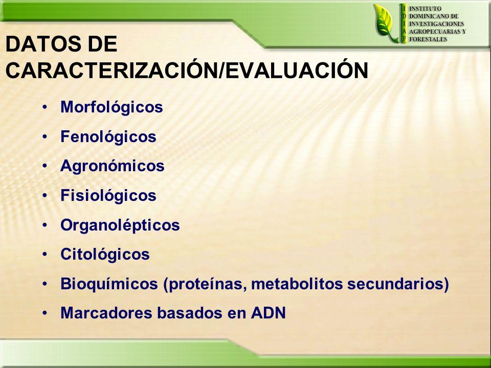 DATOS DE CARACTERIZACIÓN/EVALUACIÓN Morfológicos Fenológicos Agronómicos Fisiológicos Organolépticos Citológicos Bioquímicos (proteínas, metabolitos s