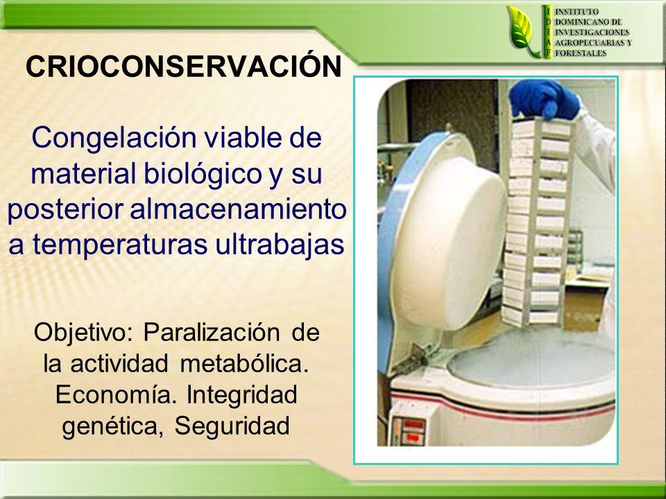 CRIOCONSERVACIÓN Objetivo: Paralización de la actividad metabólica. Economía. Integridad genética, Seguridad Congelación viable de material biológico