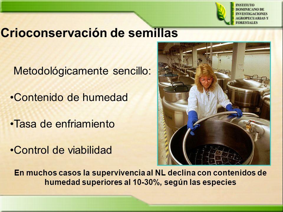 Crioconservación de semillas Metodológicamente sencillo: Contenido de humedad Tasa de enfriamiento Control de viabilidad En muchos casos la superviven