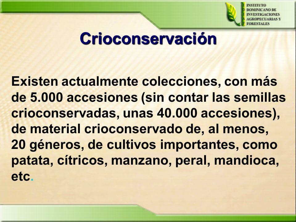 Crioconservación Existen actualmente colecciones, con más de 5.000 accesiones (sin contar las semillas crioconservadas, unas 40.000 accesiones), de ma
