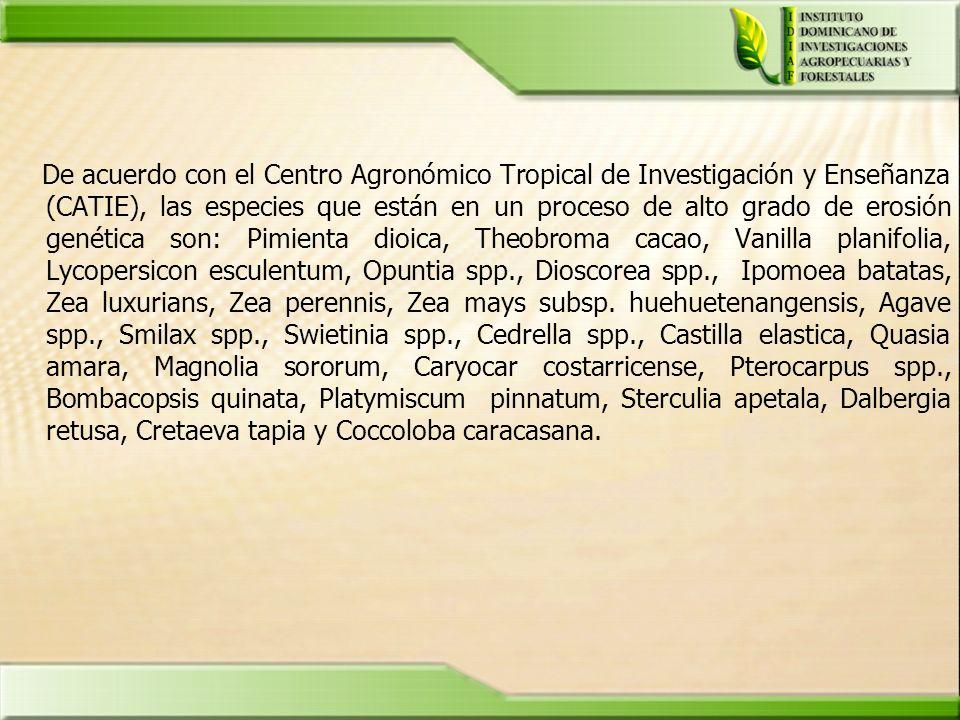 De acuerdo con el Centro Agronómico Tropical de Investigación y Enseñanza (CATIE), las especies que están en un proceso de alto grado de erosión genét