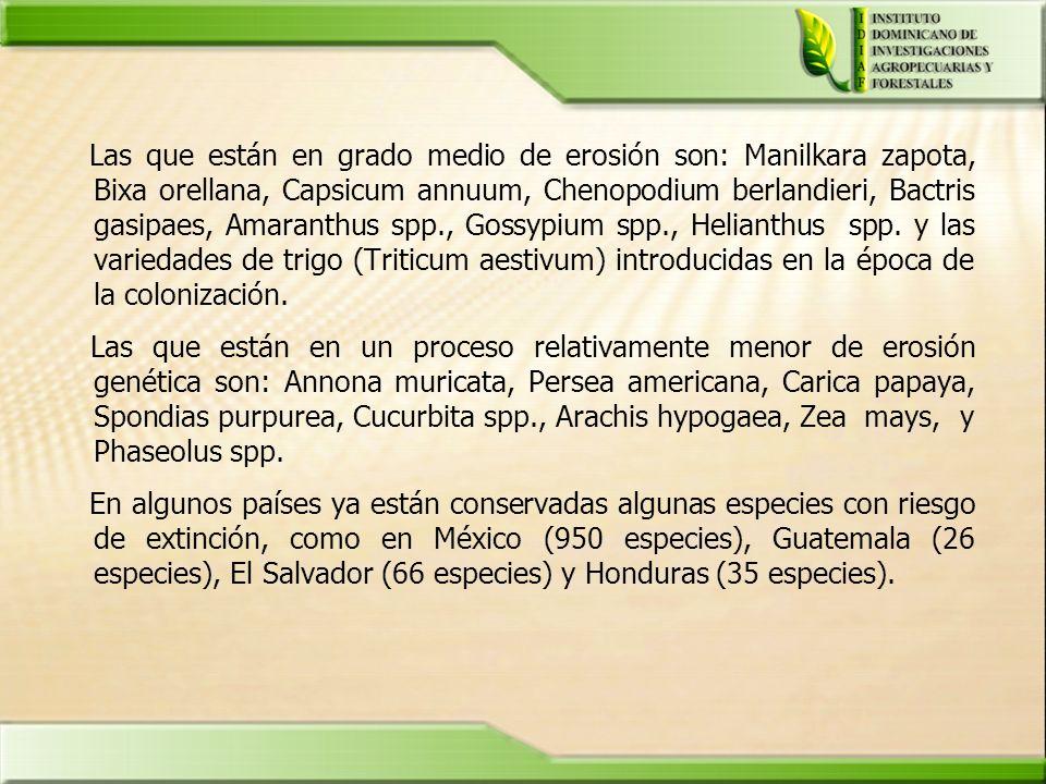 Las que están en grado medio de erosión son: Manilkara zapota, Bixa orellana, Capsicum annuum, Chenopodium berlandieri, Bactris gasipaes, Amaranthus s