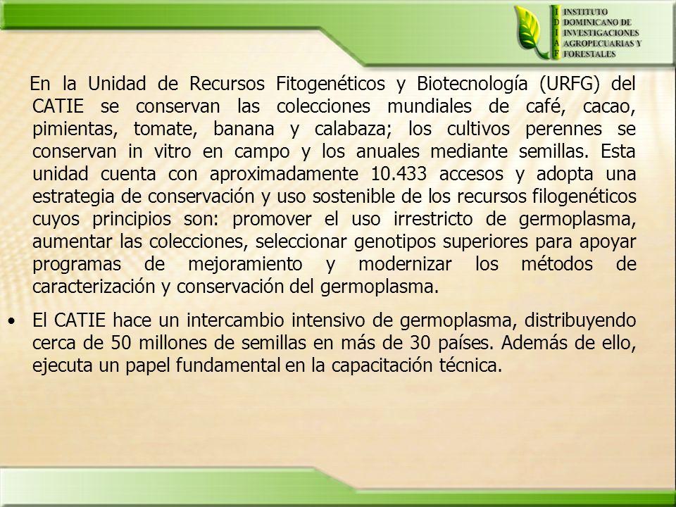 En la Unidad de Recursos Fitogenéticos y Biotecnología (URFG) del CATIE se conservan las colecciones mundiales de café, cacao, pimientas, tomate, bana