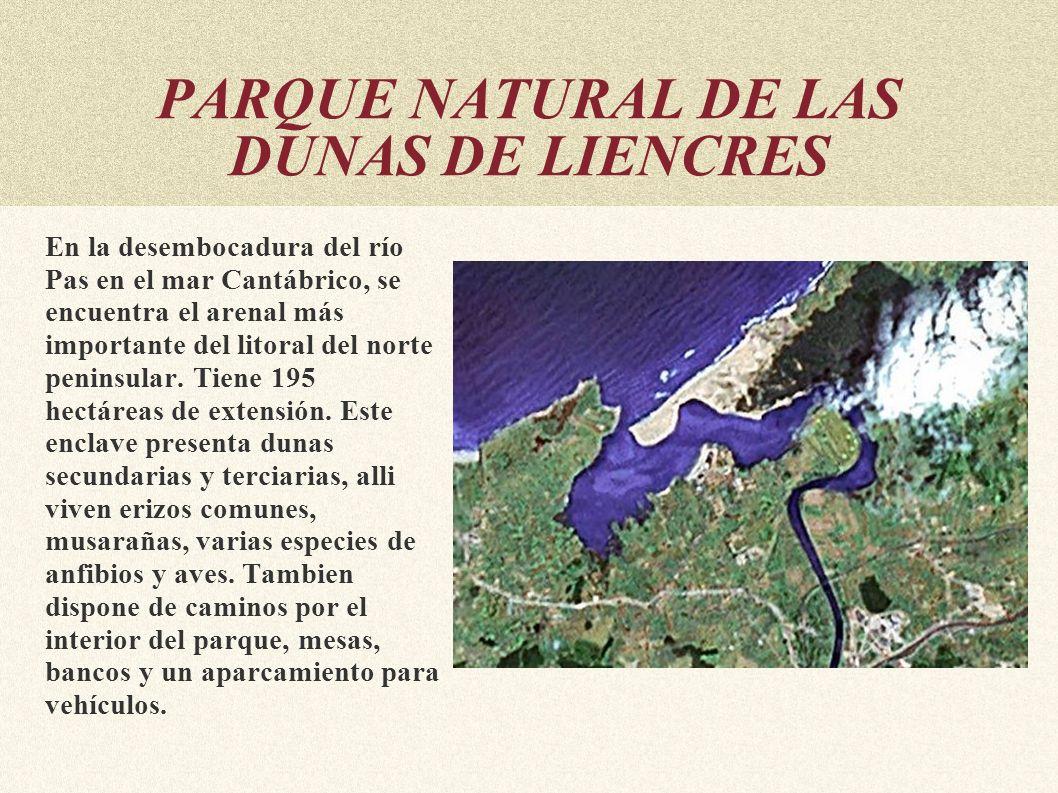 PARQUE NATURAL DE LAS DUNAS DE LIENCRES En la desembocadura del río Pas en el mar Cantábrico, se encuentra el arenal más importante del litoral del no