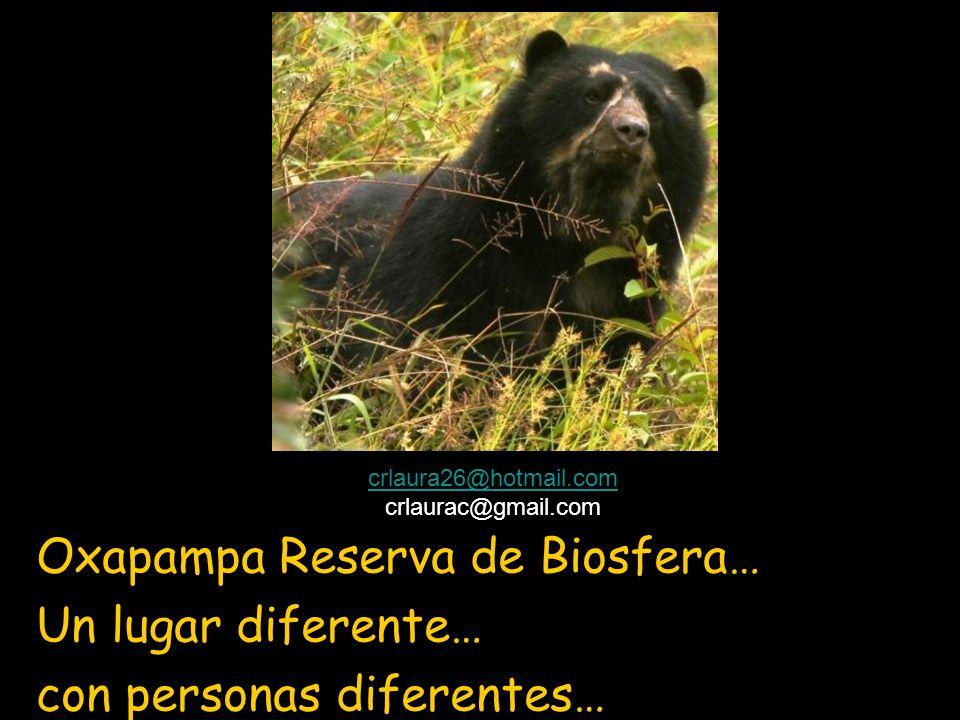 Oxapampa Reserva de Biosfera… Un lugar diferente… con personas diferentes… crlaura26@hotmail.com crlaurac@gmail.com