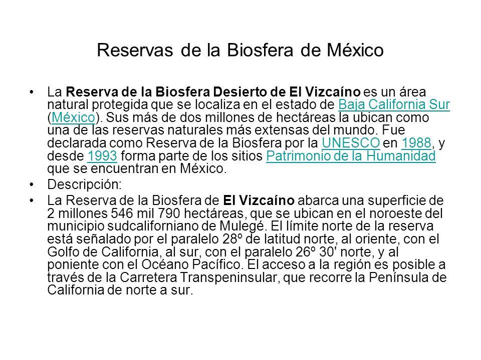 Reservas de la Biosfera de México La Reserva de la Biosfera Desierto de El Vizcaíno es un área natural protegida que se localiza en el estado de Baja