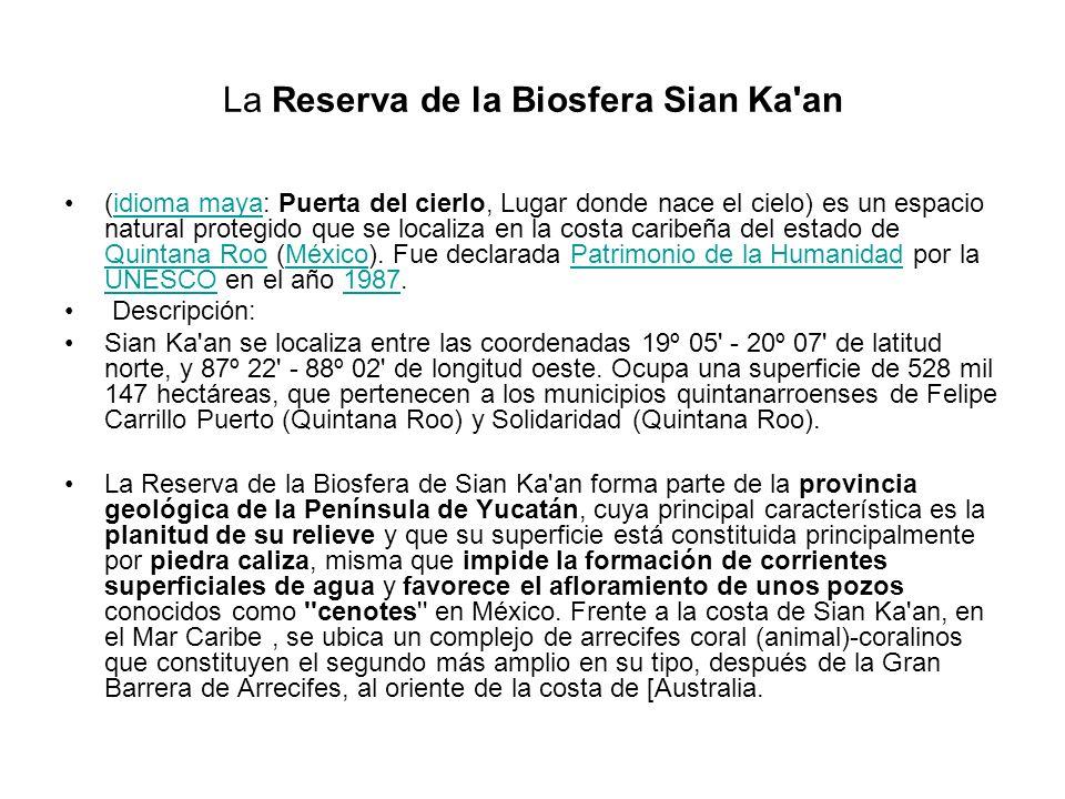 La Reserva de la Biosfera Sian Ka'an (idioma maya: Puerta del cierlo, Lugar donde nace el cielo) es un espacio natural protegido que se localiza en la
