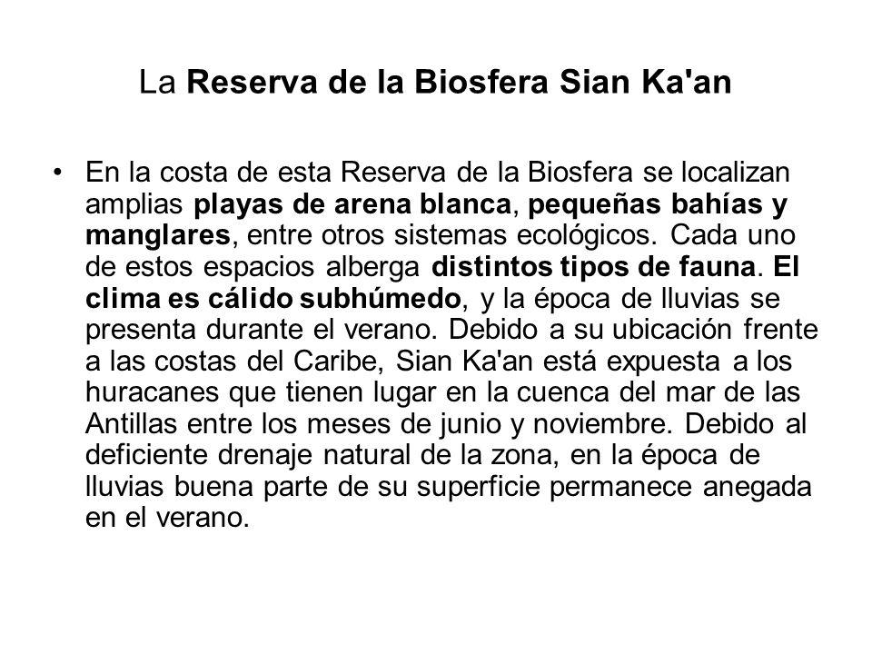 La Reserva de la Biosfera Sian Ka'an En la costa de esta Reserva de la Biosfera se localizan amplias playas de arena blanca, pequeñas bahías y manglar