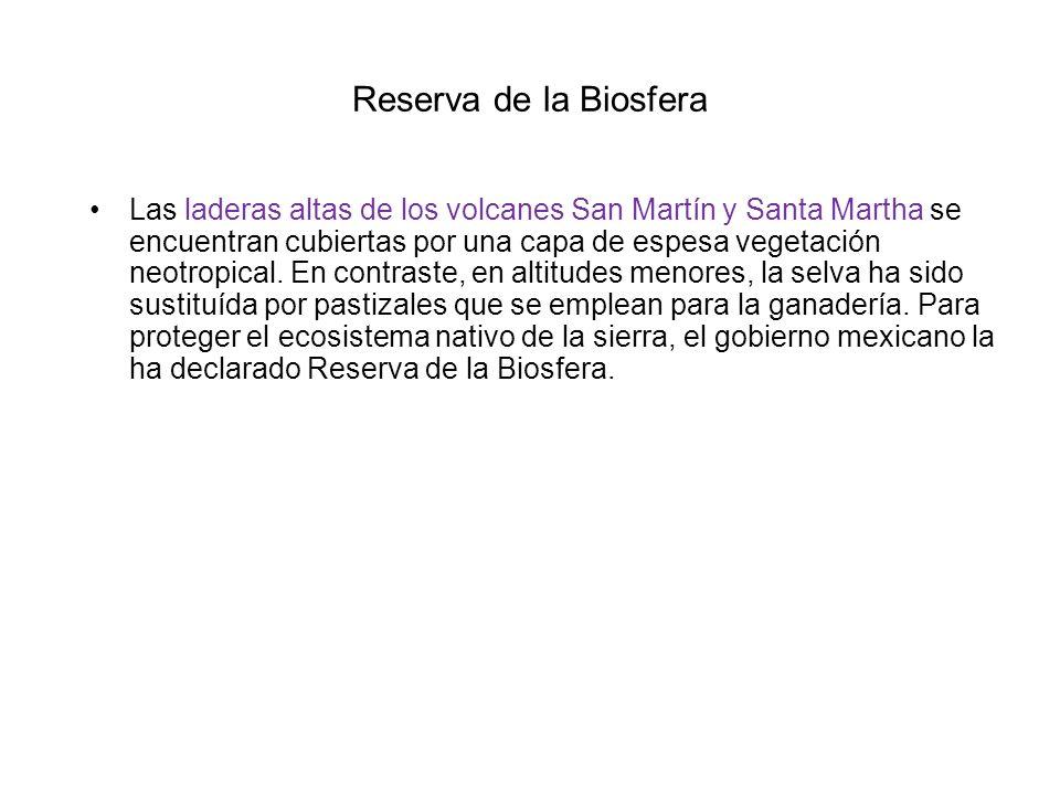 Reserva de la Biosfera Las laderas altas de los volcanes San Martín y Santa Martha se encuentran cubiertas por una capa de espesa vegetación neotropic