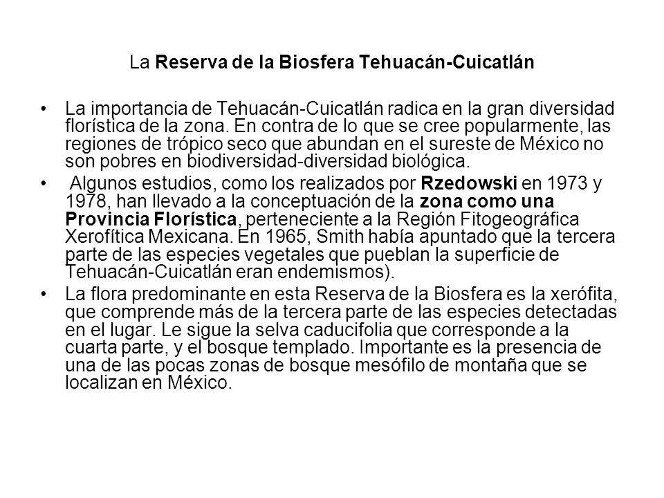 La Reserva de la Biosfera Tehuacán-Cuicatlán La importancia de Tehuacán-Cuicatlán radica en la gran diversidad florística de la zona. En contra de lo
