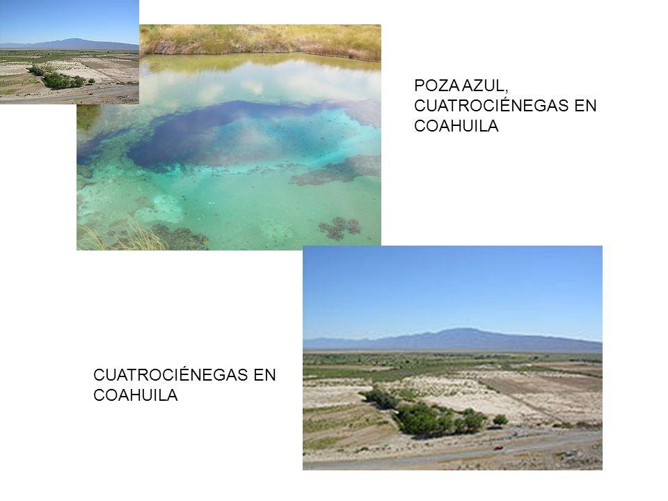 POZA AZUL, CUATROCIÉNEGAS EN COAHUILA CUATROCIÉNEGAS EN COAHUILA