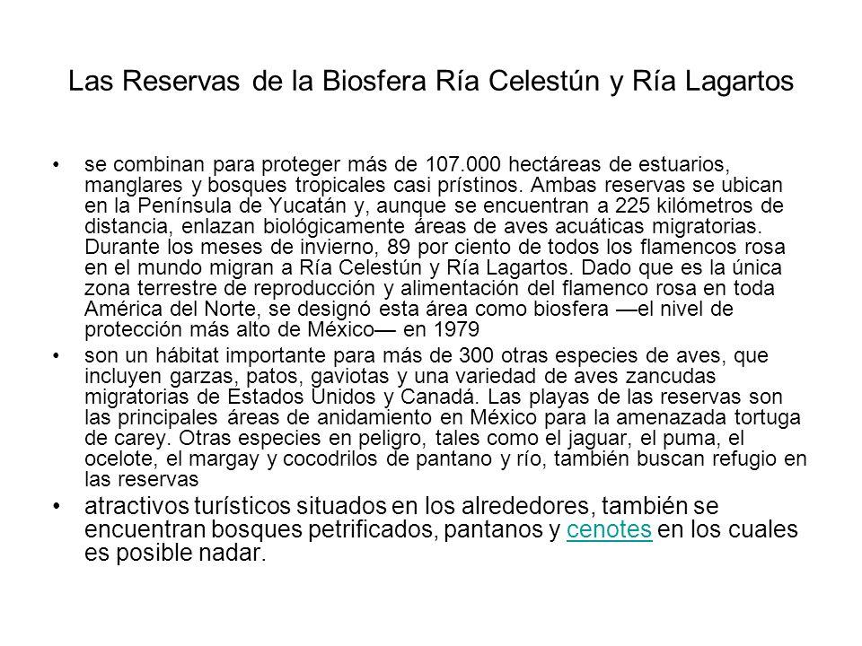 Las Reservas de la Biosfera Ría Celestún y Ría Lagartos se combinan para proteger más de 107.000 hectáreas de estuarios, manglares y bosques tropicale