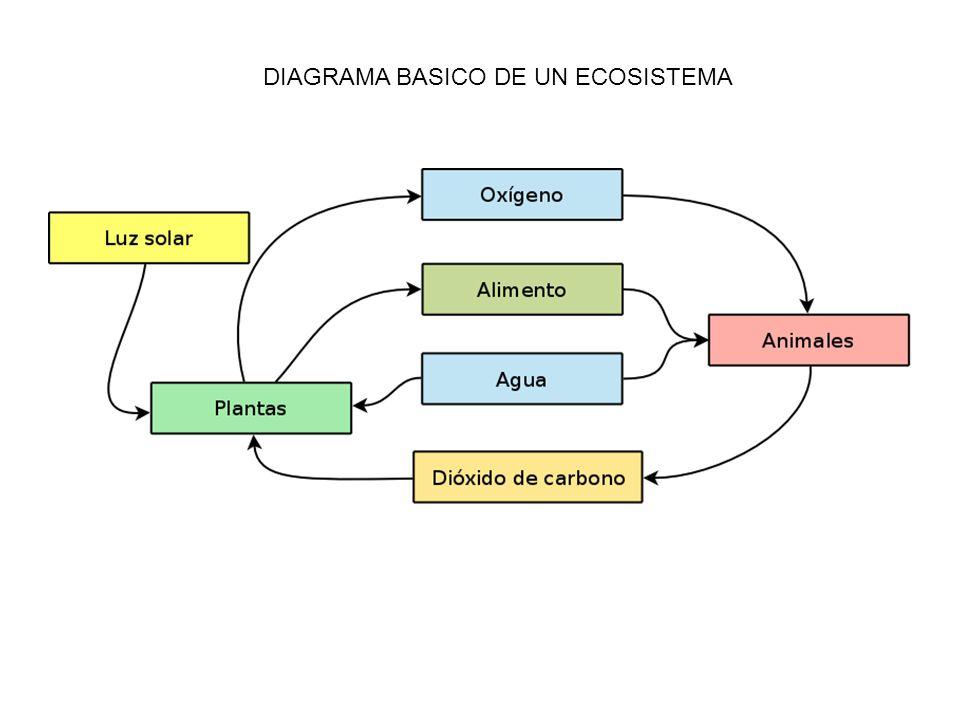 DIAGRAMA BASICO DE UN ECOSISTEMA
