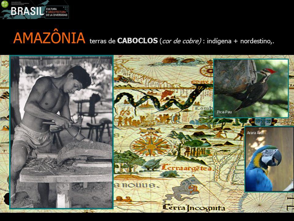 AMAZÔNIA terras de CABOCLOS (cor de cobre) : indígena + nordestino,. Pica-Pau Arara Azul