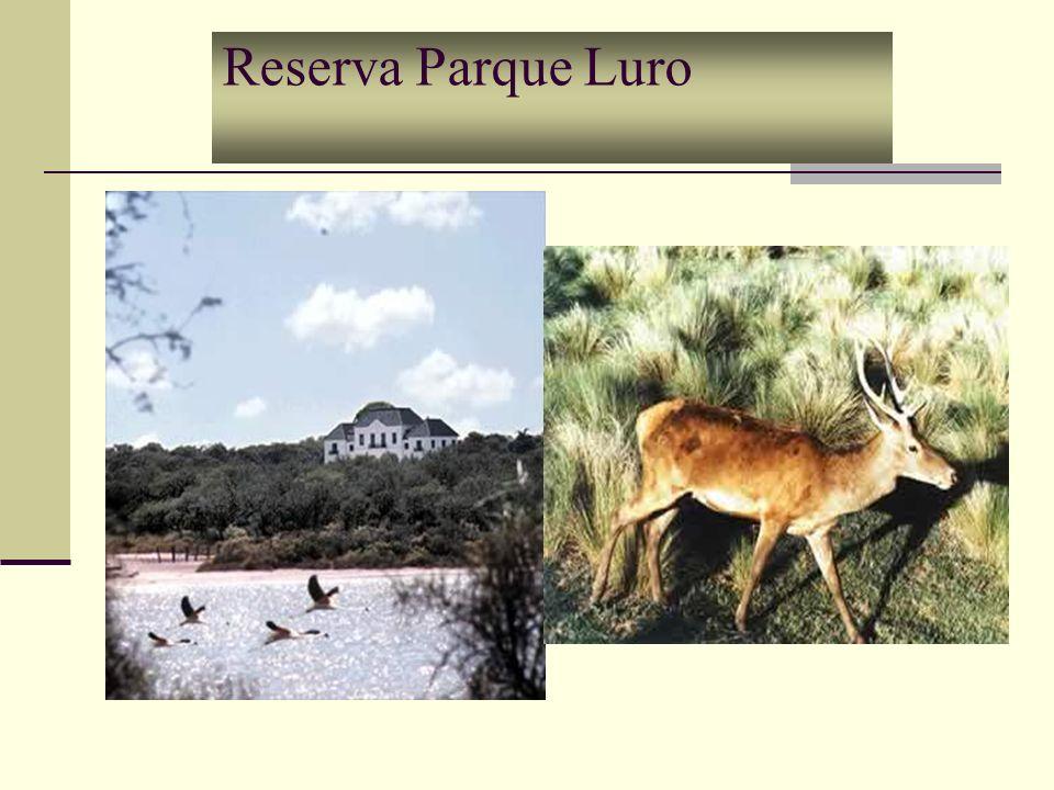 La Reserva Parque Luro Se encuentra a 35 km de Santa Rosa, sobre la Ruta Nacional Nº 35 en dirección Sur.
