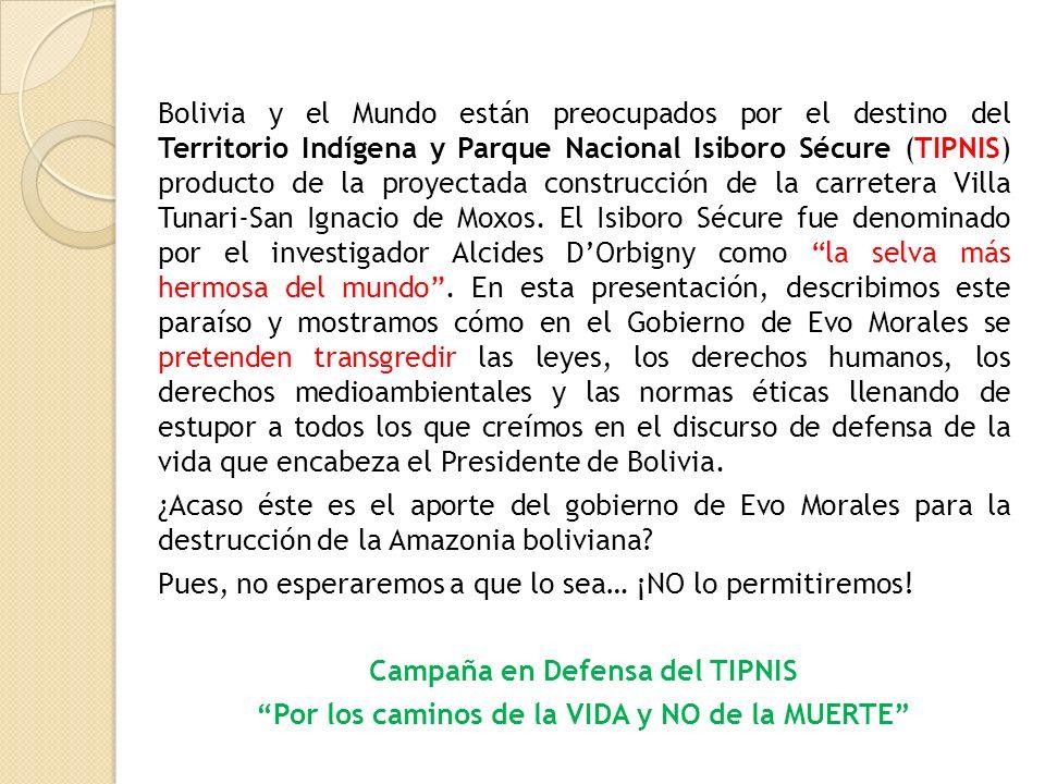 Bolivia y el Mundo están preocupados por el destino del Territorio Indígena y Parque Nacional Isiboro Sécure (TIPNIS) producto de la proyectada constr