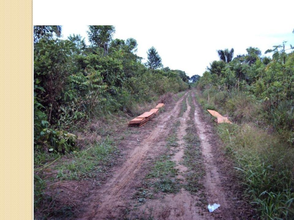 La construcción de caminos está ligada a la deforestación.