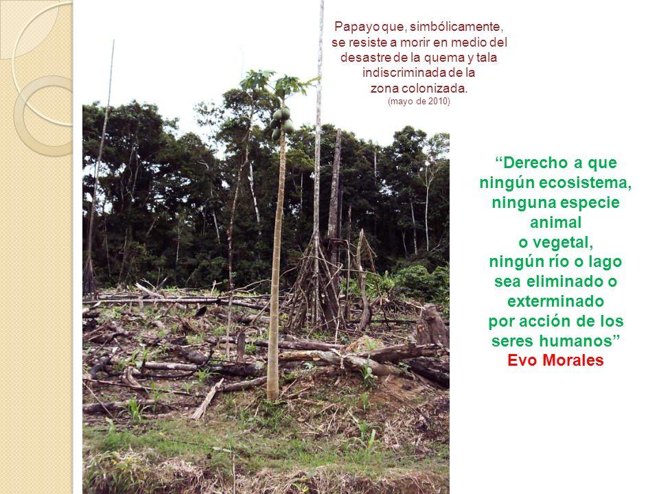 Derecho a que ningún ecosistema, ninguna especie animal o vegetal, ningún río o lago sea eliminado o exterminado por acción de los seres humanos Evo M