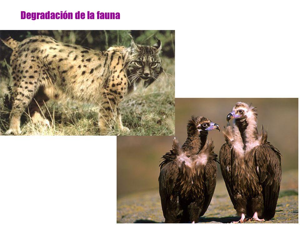 Degradación de la fauna