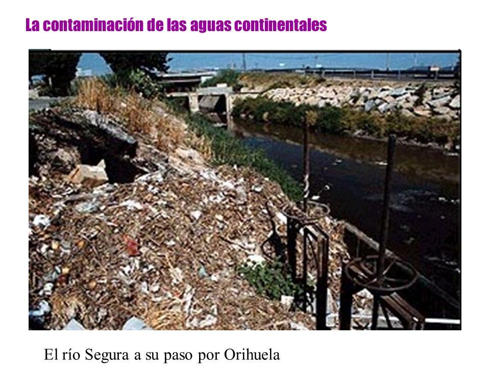 La contaminación de las aguas continentales El río Segura a su paso por Orihuela