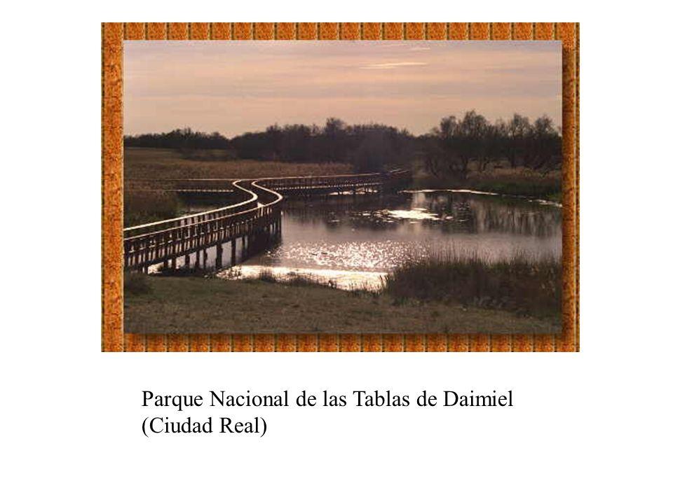 Parque Nacional de las Tablas de Daimiel (Ciudad Real)