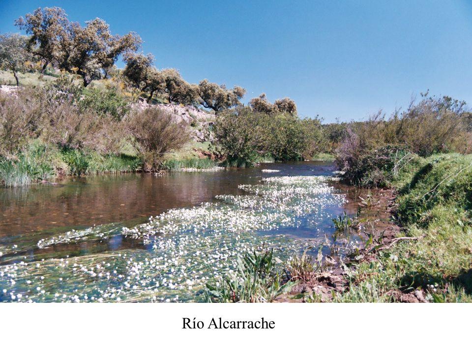Río Alcarrache