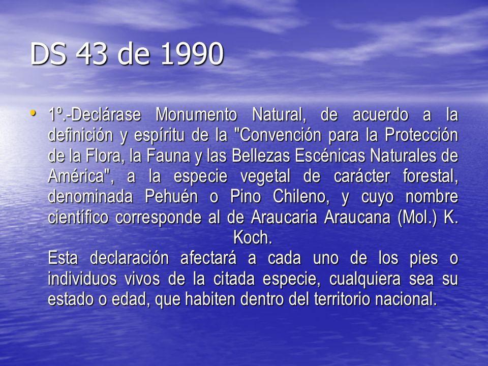 DS 43 de 1990 1º.-Declárase Monumento Natural, de acuerdo a la definición y espíritu de la Convención para la Protección de la Flora, la Fauna y las Bellezas Escénicas Naturales de América , a la especie vegetal de carácter forestal, denominada Pehuén o Pino Chileno, y cuyo nombre científico corresponde al de Araucaria Araucana (Mol.) K.
