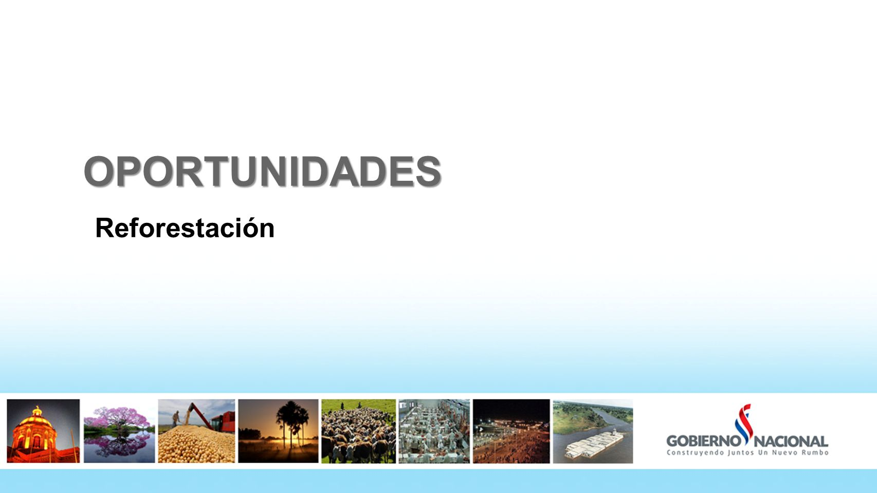 OPORTUNIDADES Reforestación