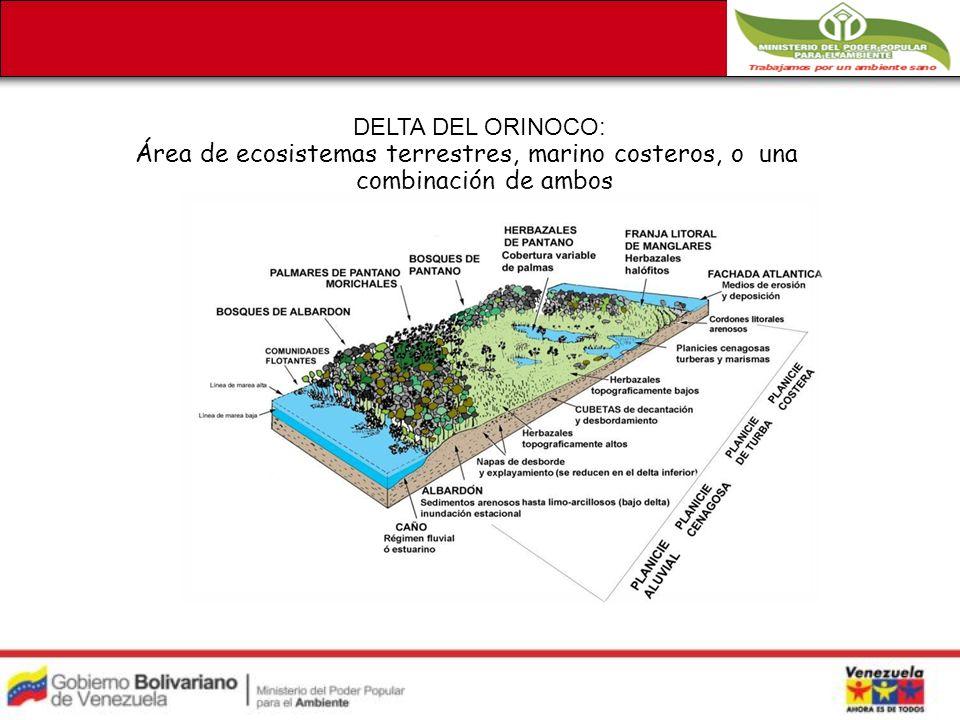 DELTA DEL ORINOCO: Área de ecosistemas terrestres, marino costeros, o una combinación de ambos