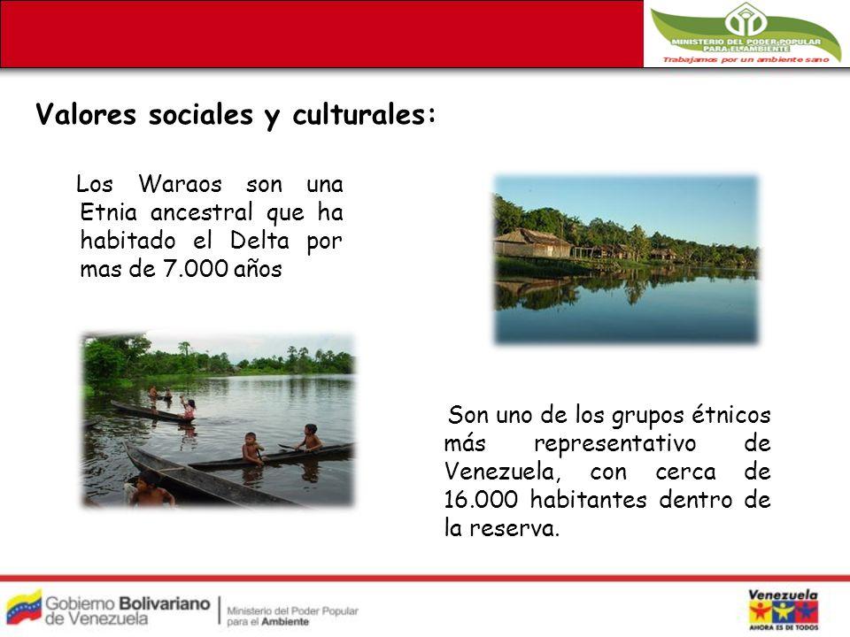Valores sociales y culturales: Los Waraos son una Etnia ancestral que ha habitado el Delta por mas de 7.000 años Son uno de los grupos étnicos más representativo de Venezuela, con cerca de 16.000 habitantes dentro de la reserva.
