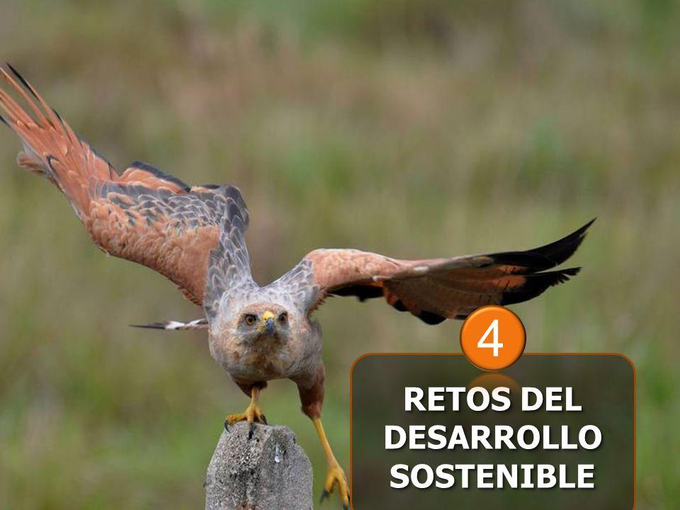 RETOS DEL DESARROLLO SOSTENIBLE 4