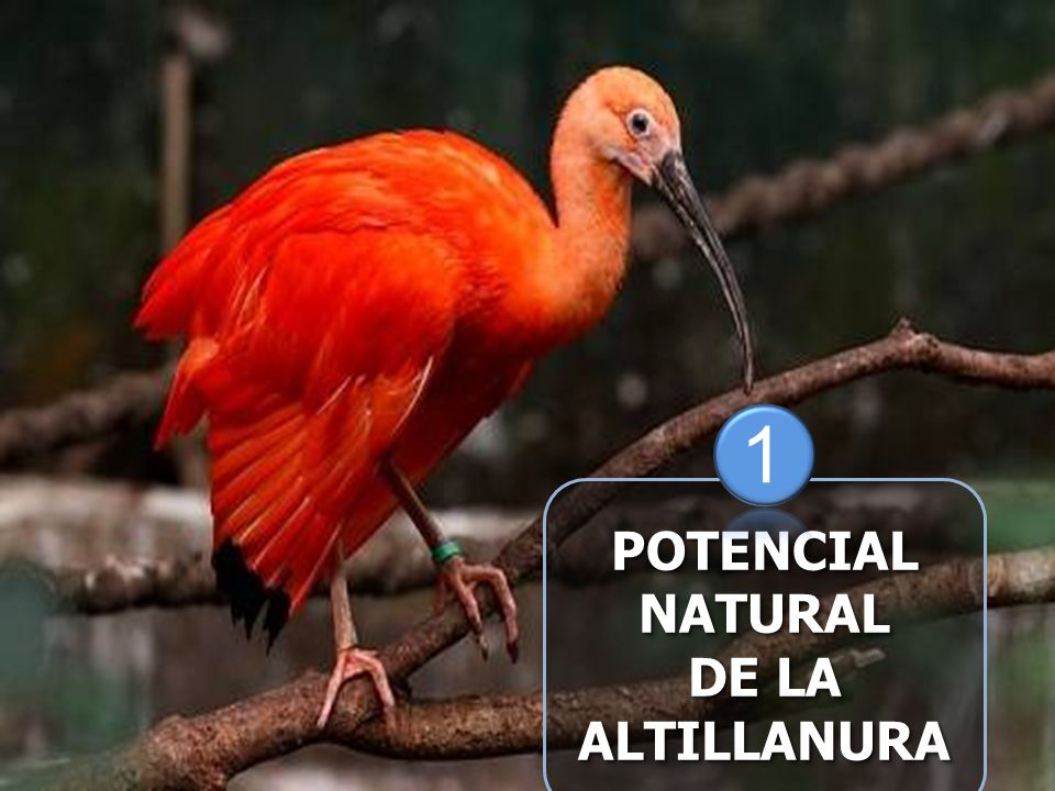 POTENCIALNATURAL DE LA ALTILLANURAPOTENCIALNATURAL ALTILLANURA 1