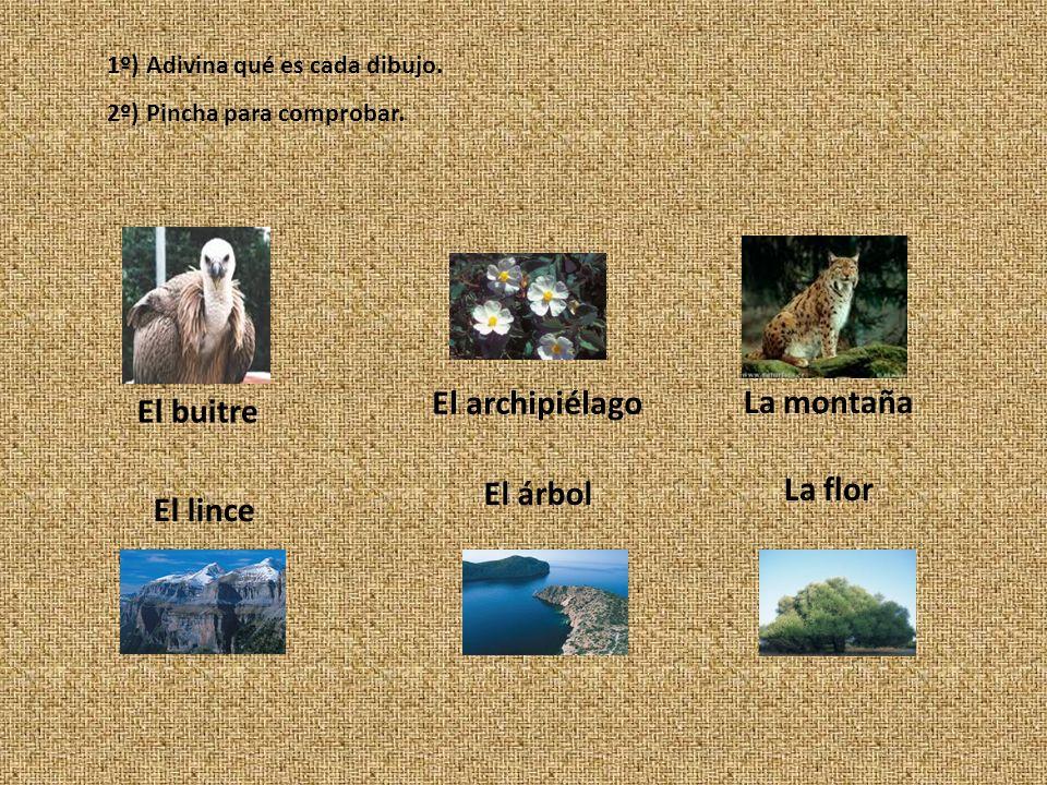 Estamos en Huesca. La extensión del parque es de 15.608 hectáreas. Su fauna es muy rica en especies, algunas de ellas en peligro de extinción. La flor