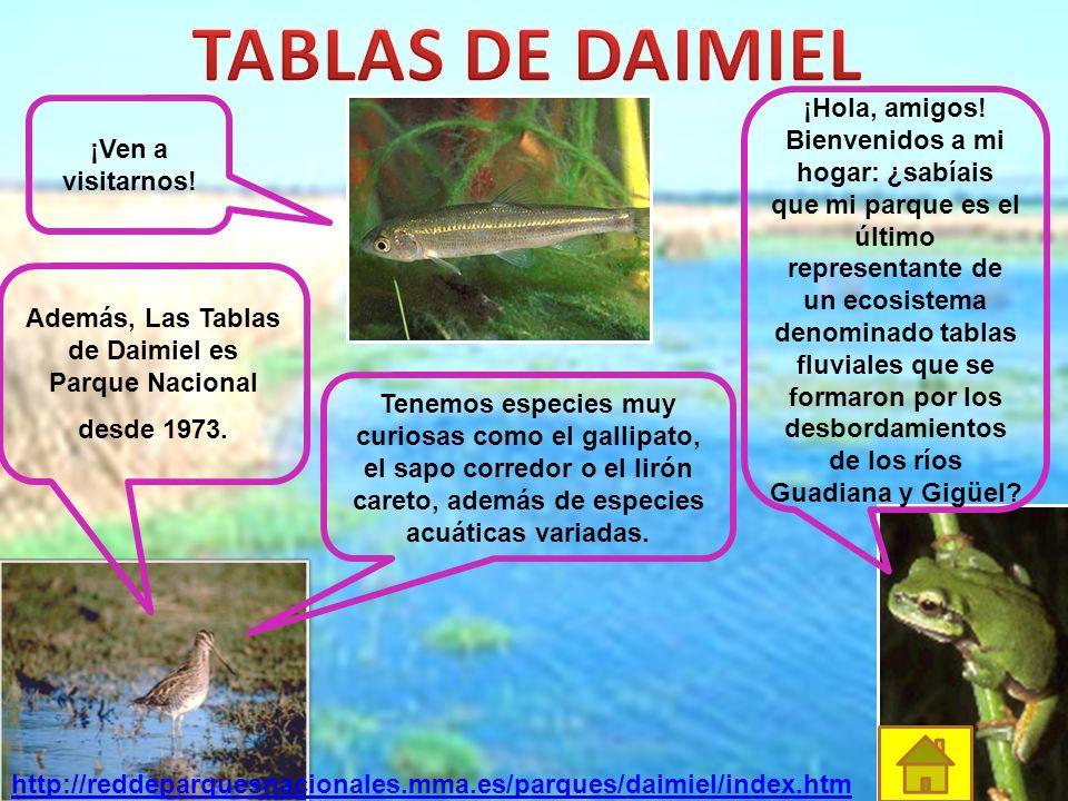 http://reddeparquesnacionales.mma.es/parques/sierra/guia_localización.htm Este parque tiene 86.208 hectáreas. Estamos en la Cordillera Penibética, ent