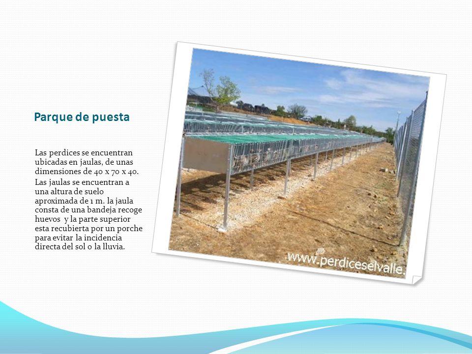 Parque de puesta Las perdices se encuentran ubicadas en jaulas, de unas dimensiones de 40 x 70 x 40. Las jaulas se encuentran a una altura de suelo ap