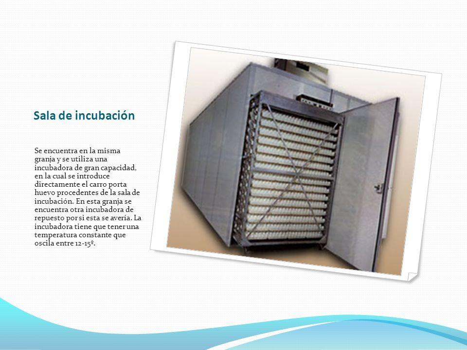Sala de incubación Se encuentra en la misma granja y se utiliza una incubadora de gran capacidad, en la cual se introduce directamente el carro porta