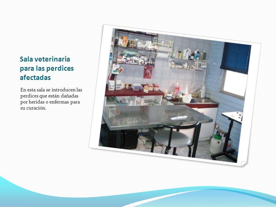 Sala veterinaria para las perdices afectadas En esta sala se introducen las perdices que están dañadas por heridas o enfermas para su curación.