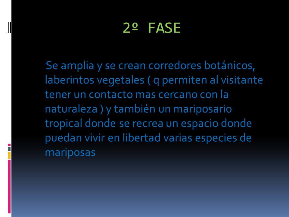 2º FASE Se amplia y se crean corredores botánicos, laberintos vegetales ( q permiten al visitante tener un contacto mas cercano con la naturaleza ) y también un mariposario tropical donde se recrea un espacio donde puedan vivir en libertad varias especies de mariposas