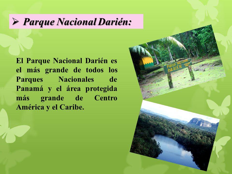 El Parque Nacional Darién es el más grande de todos los Parques Nacionales de Panamá y el área protegida más grande de Centro América y el Caribe.